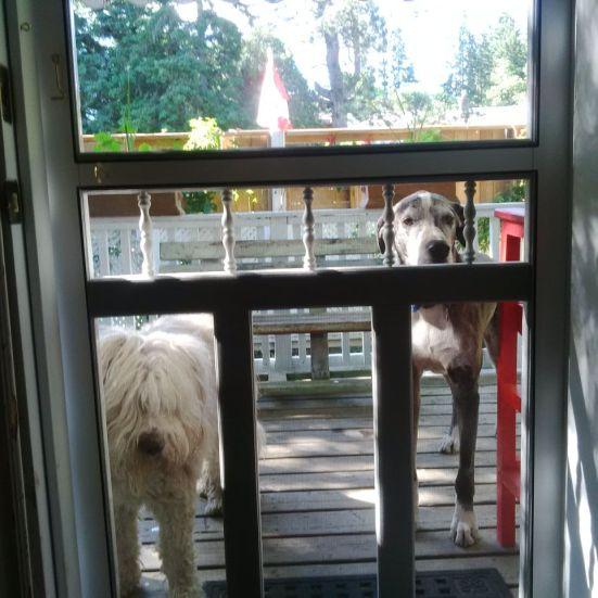 door dogs